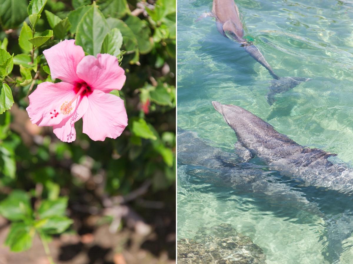 Hawaii Big Island Vacation_8510