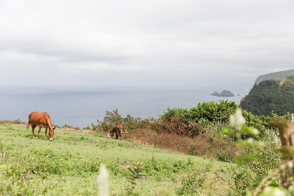Hawaii Big Island Vacation_8525
