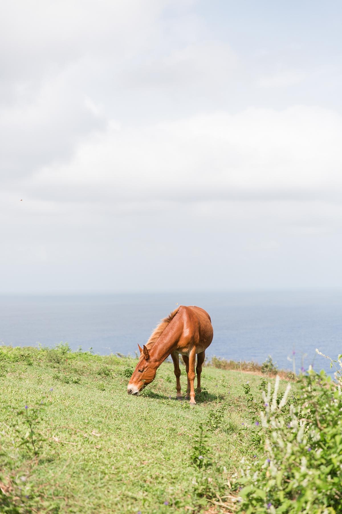 Hawaii Big Island Vacation_8528