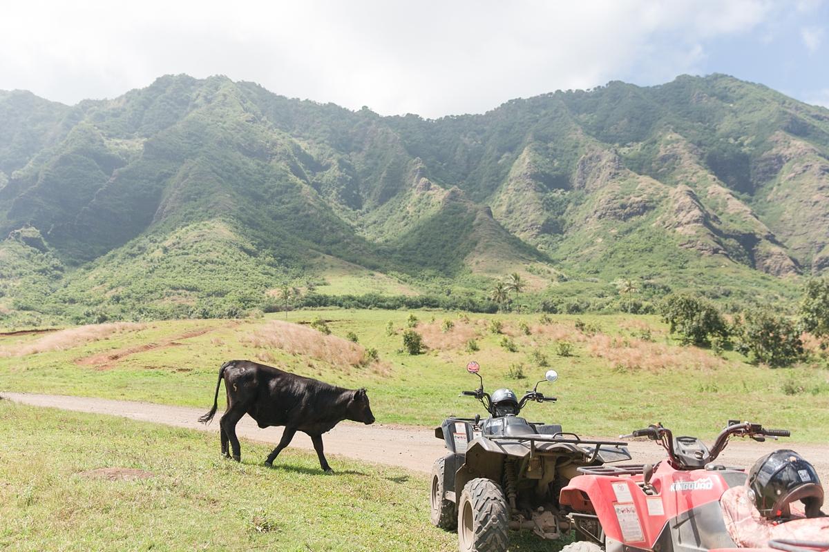 hawaiian vacation oahu_8614